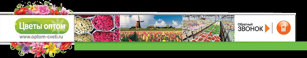 Купить цветы оптом москва цена заказ цветов в оренбурге с доставкой круглосуточно